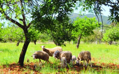 Rural tourism and agrotourism in Ibiza